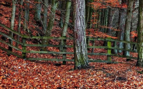 Расстояние от дерева до забора соседа: посадка плодовых деревьев, нормативы